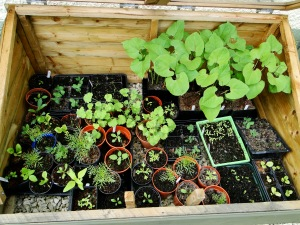 Packed cold frame