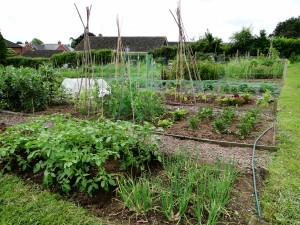 The plot in June