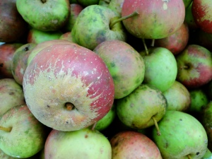 Cotehele Apples