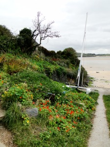 Nasturtiums by the sea