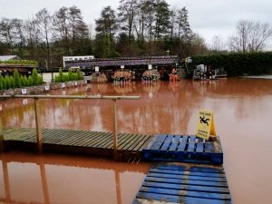 Flooded garden centre