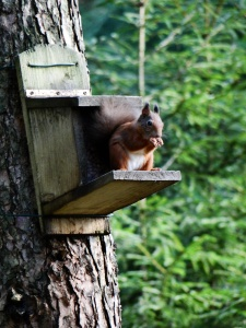 The cutest red squirrel