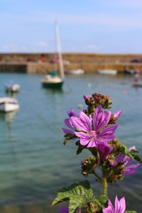 Mousehole and Mallow